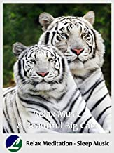Best cats and meditation Reviews