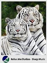 Relax Music & Beautiful Big Cats - Relax Meditation - Sleep Music