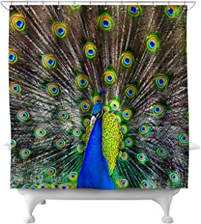 Lantern Press Peacock 49428 (74x74 Polyester Shower Curtain)