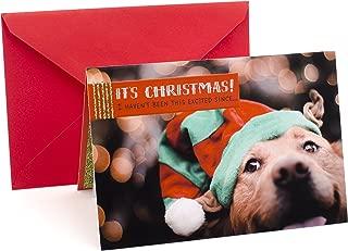 Hallmark Funny Christmas Card (Excited Dog)
