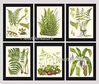Botanical Set of 6 Prints Unframed Antique Beautiful Ferns Green Forest Nature Home Room Fern Decor Wall Art