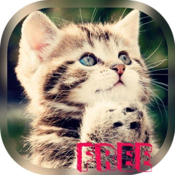 Best cute cat wallpaper Reviews