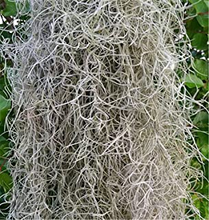 Preserved Moss Dired 8oz Spanish Moss Natural Color Decorate Moss Florist Supplies (Natural)