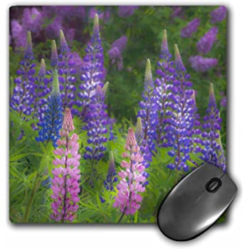 mp/_99176/_1 3dRose 8 x 8 x 0.25 Inches Mouse Pad Field of Lavender Inspirational Joy Botanical Flowers