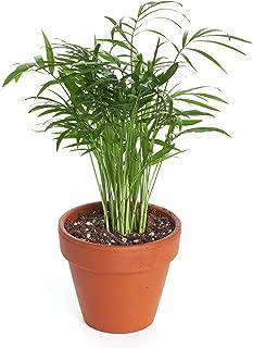 Shop Succulents | Air Purifying 4