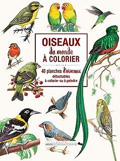 Oiseaux du monde à colorier: 40 planches d'oiseaux détachables à colorier ou à peindre