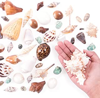Super Z Outlet Mixed Ocean Beach Fairy Garden Seashells Marine Life for Arts & Crafts, Decorations, Party Favors Collection (Approx. 40 Pieces)