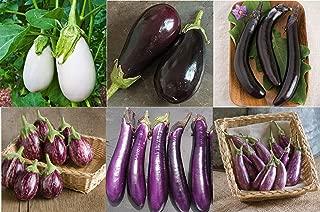 David's Garden Seeds Collection Set Eggplant Hybrid (Multi) 6 Varieties 250 Seeds (Non-GMO, Hybrid)