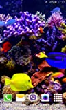 Aquarium 4K video live wallpaper