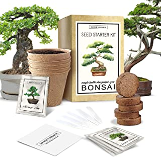 Mifutu Seed Sand Plants Perennial Bonsai Mini Purple Maple Seeds Bonsai Outdoor Plant Seeds Trees