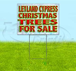 Leyland Cypress Christmas Trees for Sale (18