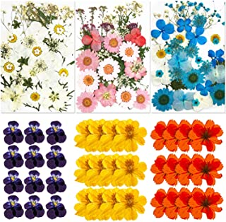135 Pieces Natural Dried Flowers Leaves Set Colorful Real Pressed Flowers Assorted Daisy Dried Flowers Mixed Decorative Pr...