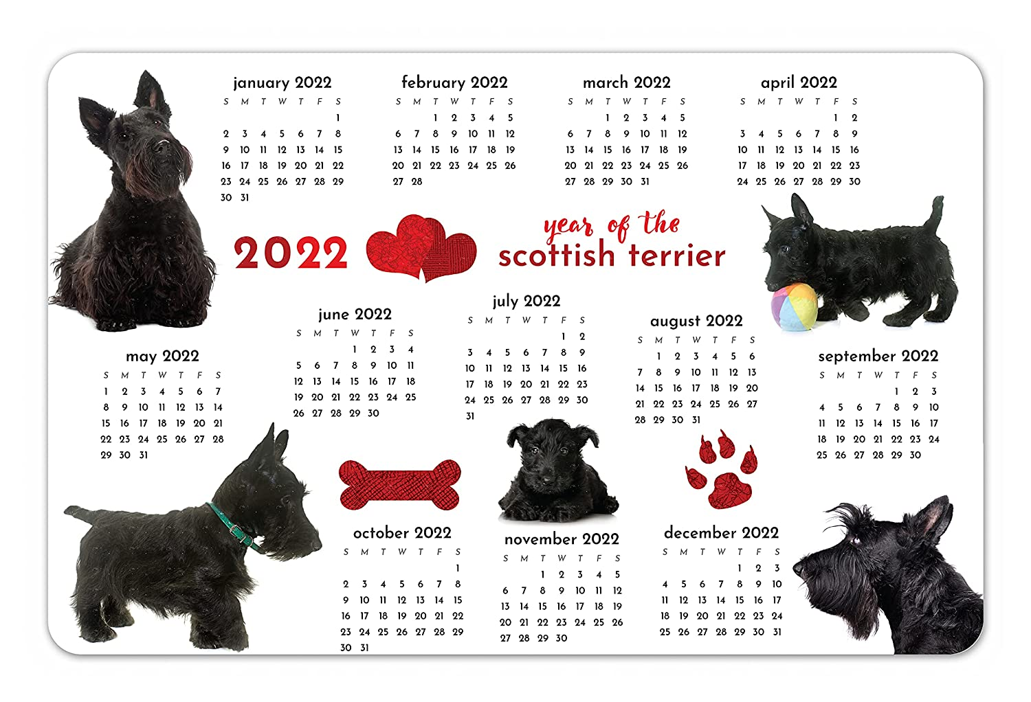 Rapid rise Year of the Scottish Terrier Laminated Twelve Months Ranking TOP4 at Glance a