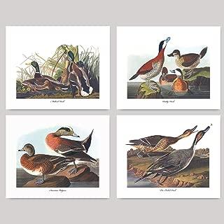 (Set of 4) Duck Prints (Audubon Bird Art, Home Wall Decor) - 8x10 Unframed