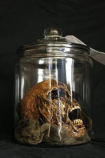 Best skull in jar Reviews