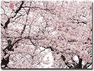 Cherry Blossom Bonanza by Ariane Moshayedi, 30x47-Inch Canvas Wall Art