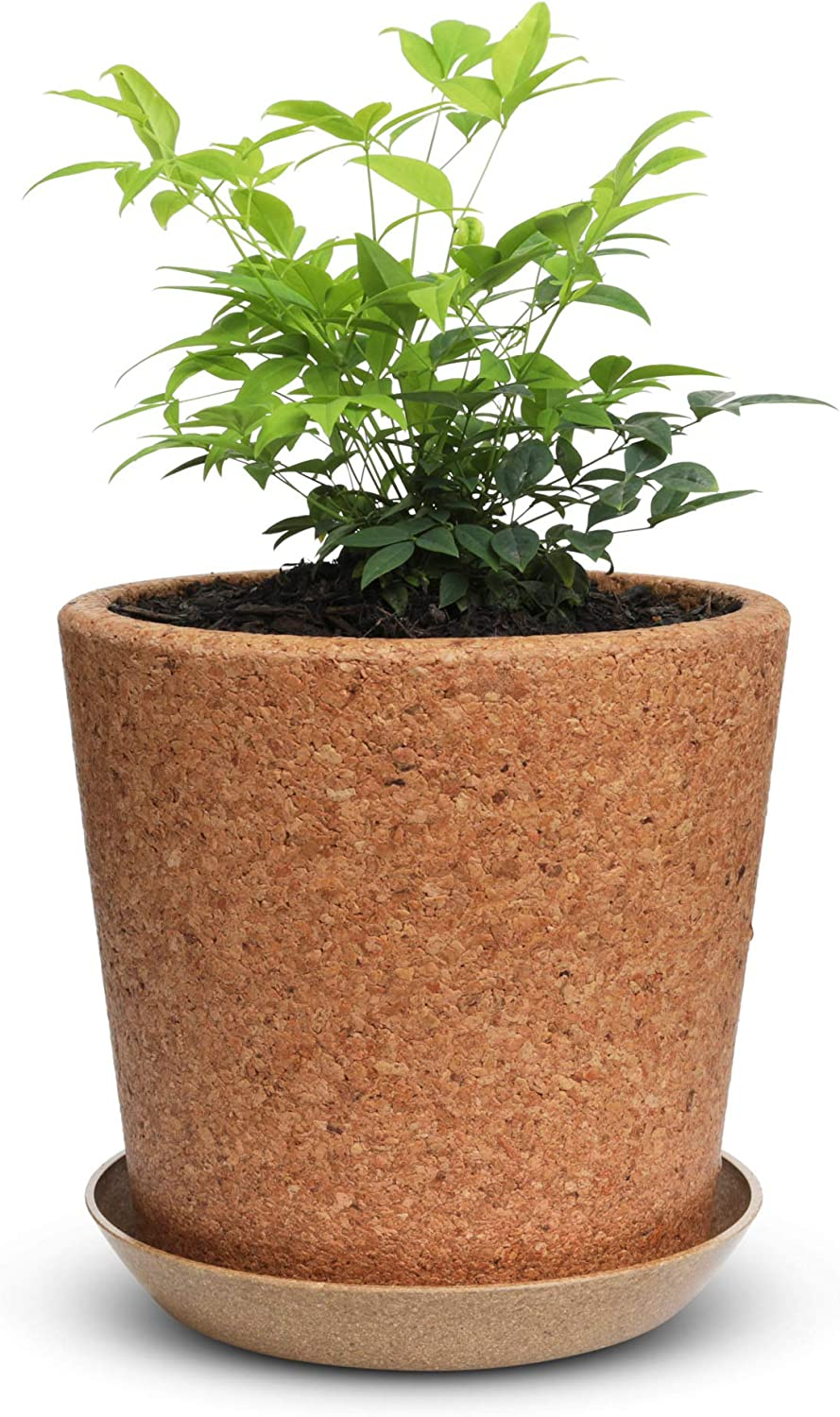 """Wild Pact 7.5"""" Cork Flower Pot with Drainage (Coarse Grain): Eco-Friendly Natural Pot for Plants - 1x Cork Pot + Rice Hull Saucer Set – Succulents, Herbs - Multi Use Indoor Planter - Gardening Gift"""
