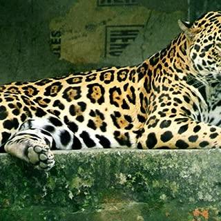 jaguar hd
