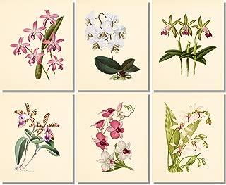 Flower Wall Art - Vintage Orchids- Botanical Prints (Set of 6) - 8x10 - Unframed - Floral Decor