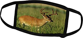 3dRose White-Tailed Deer, Eight Point Buck in Velvet, Tennessee 01 - Face Covers (fc_251423_3)
