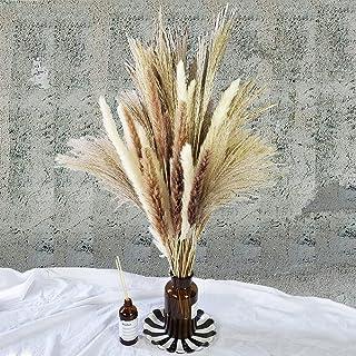 Total 60 Pcs | 15 Pcs White Pampas & 15 Pcs Brown Pampas & 30 Pcs Reed Grass/Natural Dried Pampas Grass for Flower Arrange...