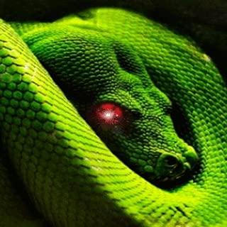 Moving Snake Live Wallpaper