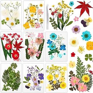 Auihiay 96 pièces 40 Sortes de Vraies Fleurs séchées pressées séchées Presse Feuilles Bougie Faisant des Fleurs pour résin...