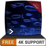 Acuario de peces en HD gratis: disfruta de la carrera de peces en tu televisor HDR 4K, televisor 8K y dispositivos de fuego como fondo de pantalla, decoración para las vacaciones de Navidad, tema para