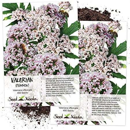 Seed Needs, Common Valerian (Valeriana officinalis) Twin Pack of 450 Seeds Each Non-GMO