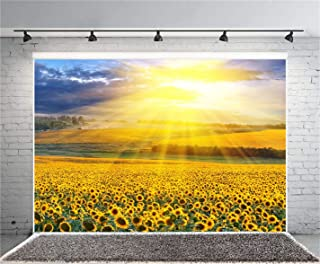 Best sunny day background Reviews