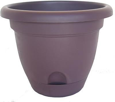 "Bloem 818573010698 Living LP0656 Lucca Self-Watering Planter, 6-Inch, Exotica, 6"""