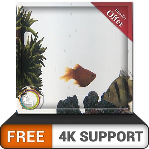 pecera gris gratis HD: decora tu habitación con un hermoso acuario de peces en tu televisor HDR 4K, televisor 8K y dispositivos de fuego como fondo de pantalla, decoración para las vacaciones de Navid