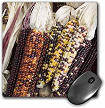 3dRose 8 x 8 x 0.25 Inches Mouse Pad, Massachusetts, Concord Native Corn/Autumn (mp_90973_1)
