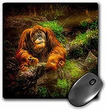 3dRose orangutan APE sunbeams Rocks ماوس (MP _ 123862_ 1)