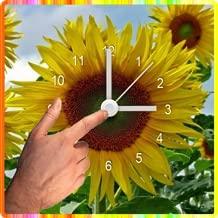 sunflower flash