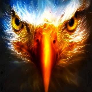 Eagle Live Wallpaper Best