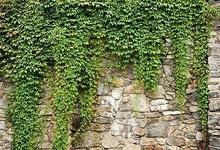 Leyiyi 10x8ft Spring Garden Leaves Backdrop Gardening Plants Grunge Stone Wall Greenery Banner Vane Branch Cover Vintage Architecture Photo Background Wedding Kids Birthday Photo Studio Vinyl Prop