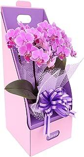 ギフトに最適!ピンク系テーブル胡蝶蘭【リンリン パープルリボン】 with ギフトラッピング『2本立ち・2WayギフトBOX入り・メッセージ対応』感謝を込めて生産者から日本全国へ胡蝶蘭をお届けいたします。