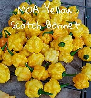 (25+) MOA Yellow Jamaican Scotch Bonnet Pepper Seeds