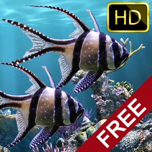 Die echten aquarium - HD