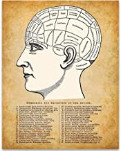 Phrenology Illustration - 11x14 Unframed Art Print - Great Gift Under $15 for People Who are Into Phrenology Theory, Divination, Interpretive Science, Mental Faculties, Character Traits, Human Anatomy