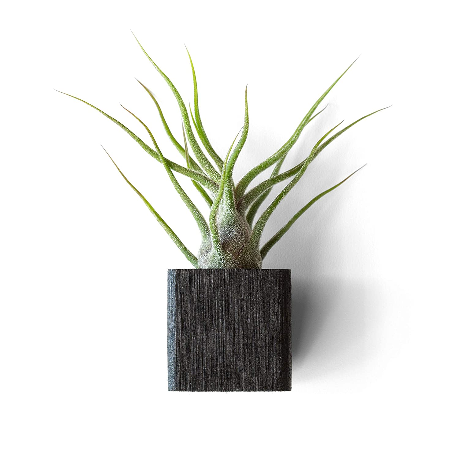 Black Refrigerator Plant Recommended Magnet Air Disp Airplant Max 61% OFF