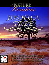 Nature Wonders - Joshua Tree - California - U.S.A.
