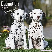 dalmatian calendar 2018