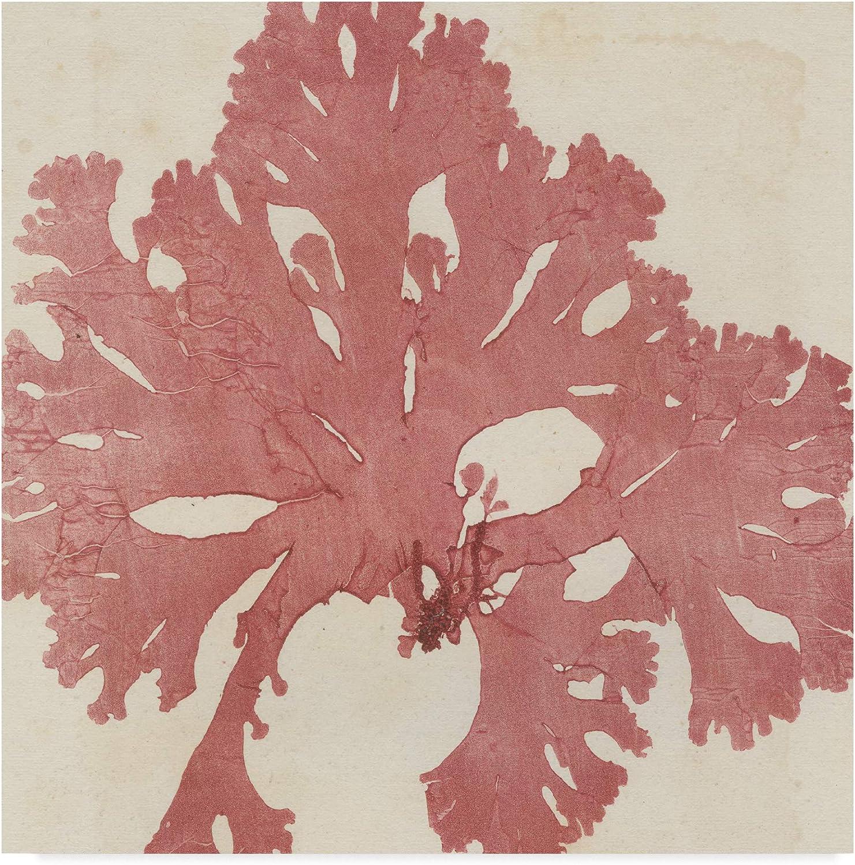 Trademark Fine Art Brilliant Seaweed V by Vision Studio V, 14x14-Inch