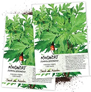 mugwort seeds