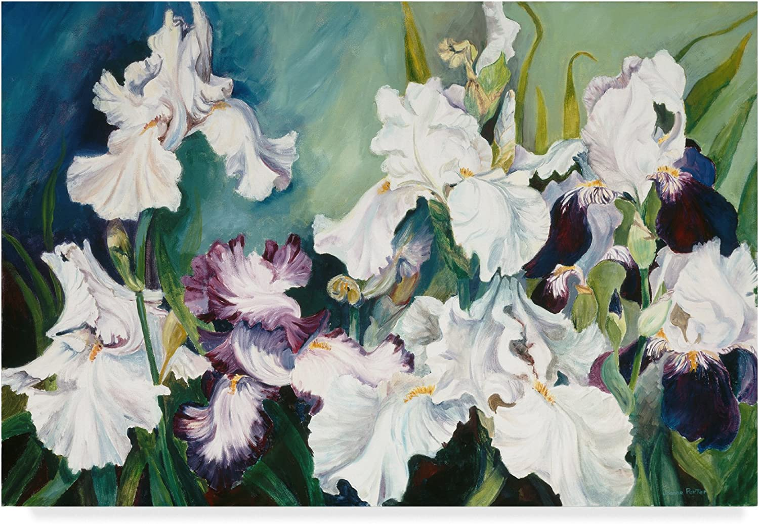 Plum And White Iris by Joanne Porter, 12x19Inch