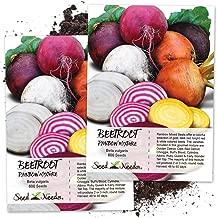 Seed Needs, Rainbow Beet Mixture (Beta vulgaris) Twin Pack of 600 Seeds Each Non-GMO