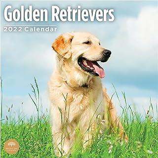 2022 Golden Retrievers Wall Calendar by Bright Day, 12 x 12 Inch, Cute Dog Puppy