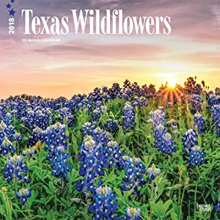 Texas Wildflowers 2018 12 x 12 Inch Monthly Square Wall Calendar, USA United States of America Southwest State Nature (English, French and Spanish Edition)